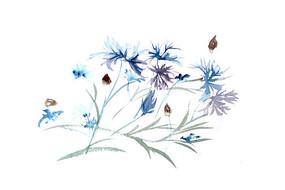 蓝色花朵插画 PSD