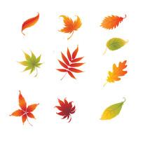 落叶树叶抠图素材