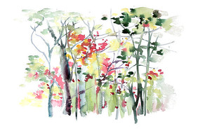 秋天的树林插画 PSD