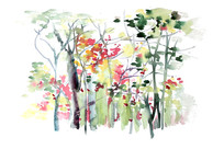 秋天的树林插画