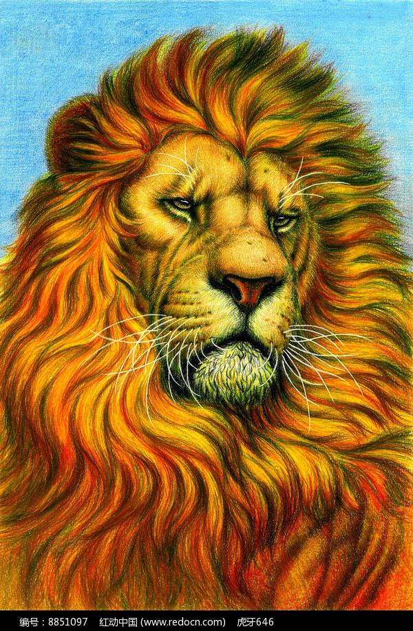 手绘的狮子插图图片
