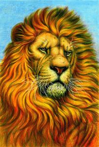 手绘的狮子插图 PSD