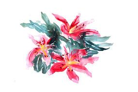 手绘花朵插画 PSD
