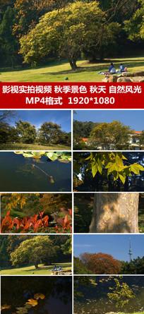 秋季景色影视实拍视频自然美景视频