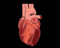 心脏跳动视频 mov