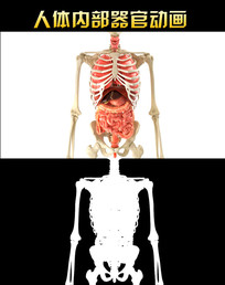 人体内部器官动画视频