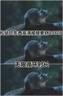 松鼠吃东西嘴巴一直动循环视频