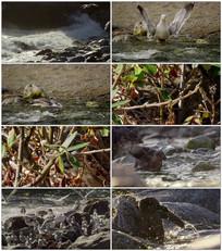 海鸥洗澡视频