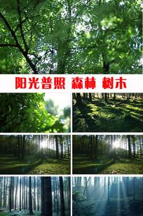 唯美绿色森林阳光普照实拍