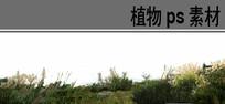 生态湿地植物ps分层素材 PSD