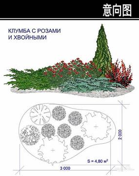 松类植物花境