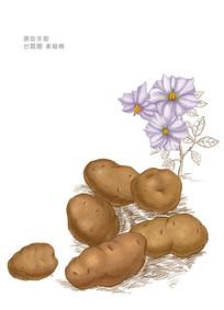 土豆马铃薯插画