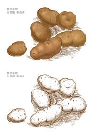 土豆手绘插画