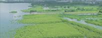 城市绿色景观园林高清实拍