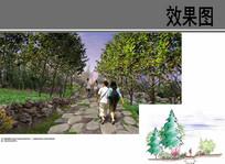 村庄步行道路设计 JPG