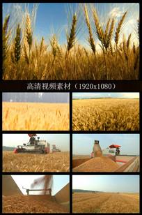 农民收割麦田视频素材