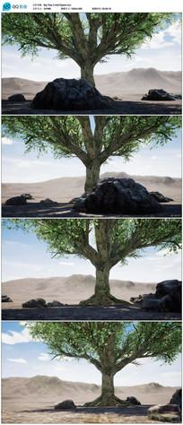 大树高清视频