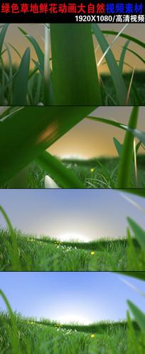 高清大自然草地鲜花视频下载