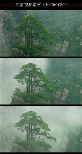 山水画迎客松风景画壁画设计