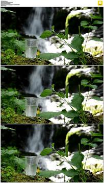 纯净的山泉水实拍视频素材
