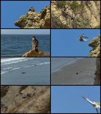 老鹰捕食小鸟视频