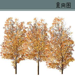 黄枫树PS素材