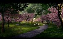 樱花树林景观