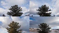 树四季变化视频