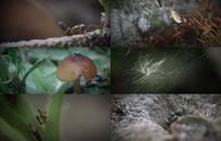 蚂蚁实拍视频