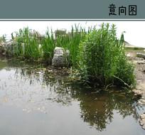 小溪植物景观素材 PSD