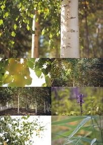 自然风光树木花草公园超清视频