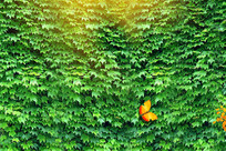 公园大景园林围墙素材 PSD