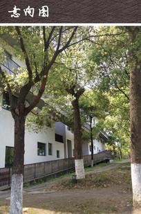 现代不规则校园建筑