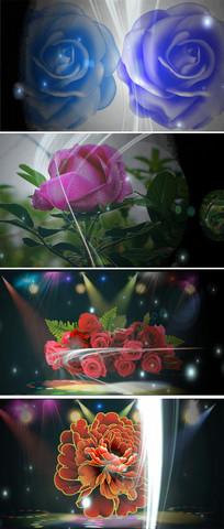 鲜花光束舞台素材视频