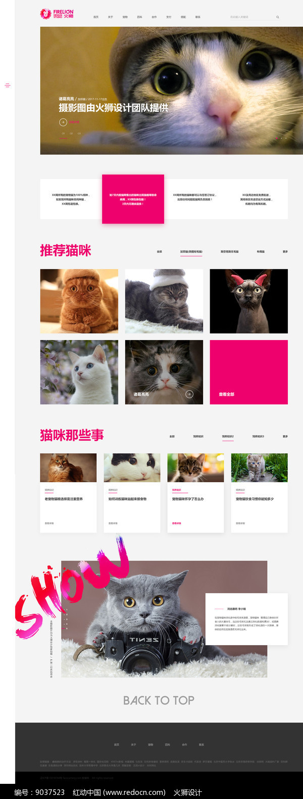 猫宠网站首页设计图片