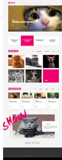 猫宠网站首页设计 PSD
