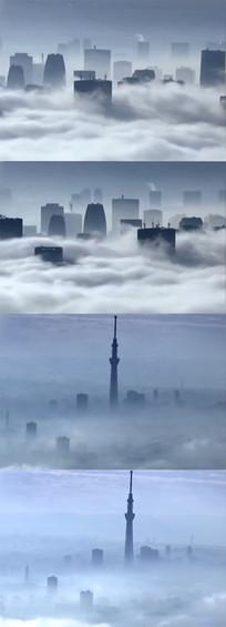 浓雾实拍视频