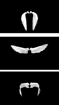 煽动的翅膀带通道视频素材