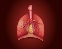 医院肺部矢量素材设计