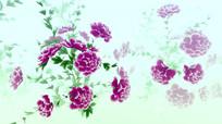 中国风水墨牡丹变幻颜色动画