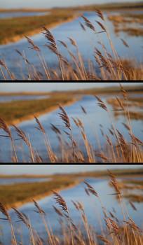 芦苇沼泽河流实拍视频