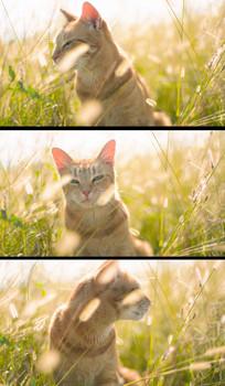 猫星人高清实拍视频素材