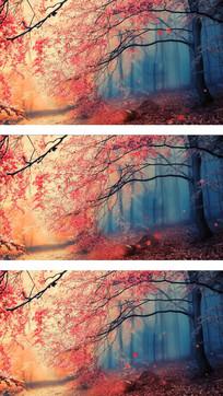 秋天枫叶led背景
