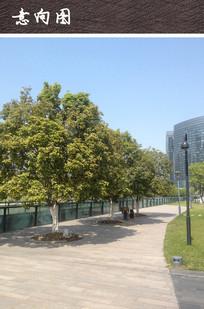 广场树池 JPG