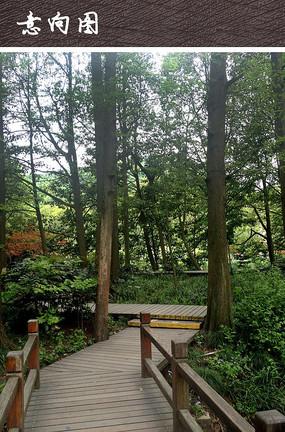 林间休闲木质栈道