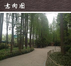 中式石质广场铺装