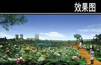 渭河景观荷塘观赏区效果图