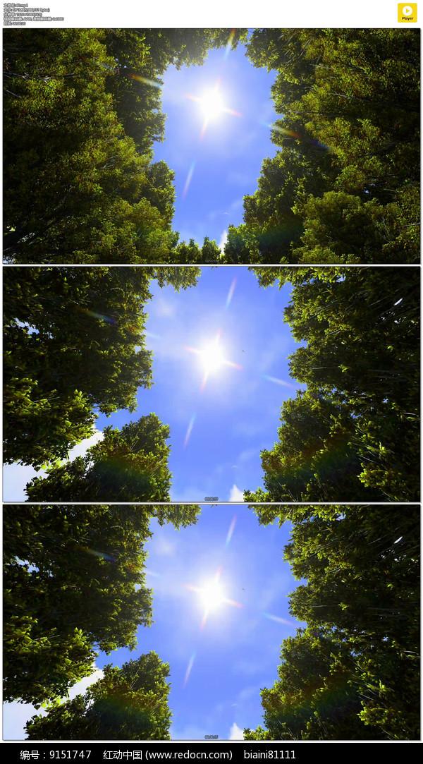 仰望森林阳光实拍视频素材