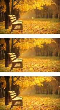 金秋岁月枫叶飘落长椅等待视频