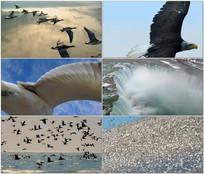 震撼大气的翱翔的鸟视频